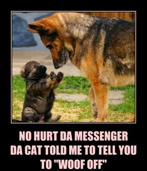 "NO HURT DA MESSENGER DA CAT TOLD ME TO TELL YOU TO ""WOOF OFF"""