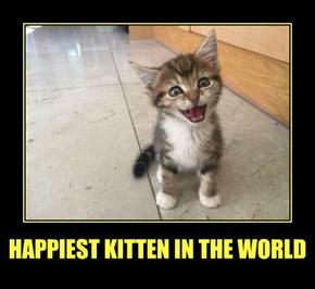 HAPPIEST KITTEN IN THE WORLD