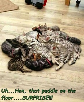 Uh...Hon, that puddle on the floor....SURPRISE!!!