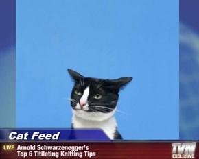 Cat Feed - Arnold Schwarzenegger's  Top 6 Titilating Knitting Tips