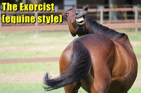 The Exorcist                                                                                                      (equine style)