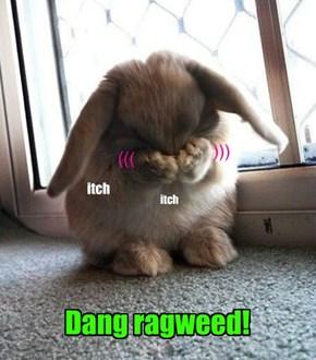 Even bunnies hate  ragweed