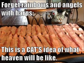 Forget rainbows and angels with harps:  This is a CAT'S idea of what heaven will be like.