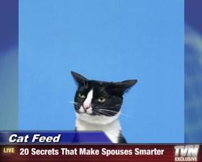 Cat Feed -  20 Secrets That Make Spouses Smarter