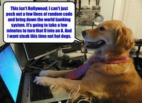 Man's best friend - the Golden Hacker