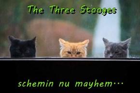The Three Stooges   schemin nu mayhem...