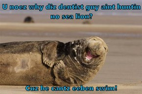 U noez why diz dentist guy aint huntin no sea lion?  Cuz he cantz eeben swim!