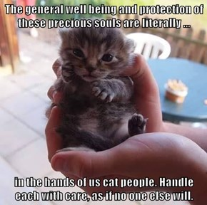 The general well being and protection of these precious souls are literally ...  in the hands of us cat people. Handle each with care, as if no one else will.