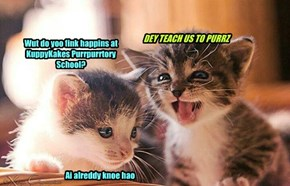 Wut do yoo fink happins at KuppyKakes Purrpurrtory School?