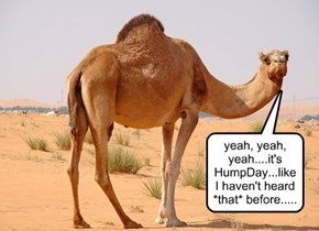 uh....HumpDay