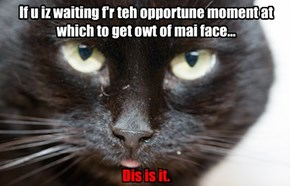 If u iz waiting f'r teh opportune moment at which to get owt of mai face... Dis is it.