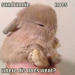 sumbunnie                        noes  where dis noes went?