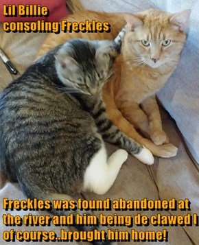 Lil Billie                                                       consoling Freckles  Freckles was found abandoned at the river and him being de clawed I of course..brought him home!