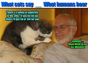 What cats say  __  What humans hear