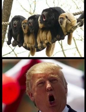 Howler Monkeys...