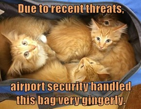 Due to recent threats,  airport security handled this bag very gingerly.