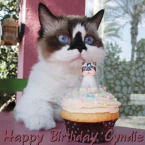 Happy Birthday, Cyndie
