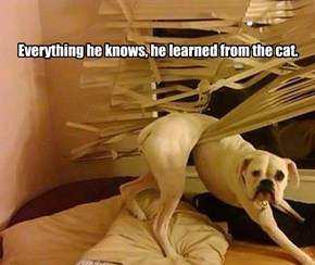 Everything he knows, he learned from the cat.
