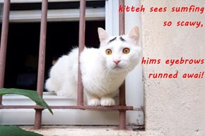kitteh sees sumfing                          so scawy, hims eyebrows                                      runned awai!