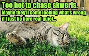 Too hot to chase skwerls.