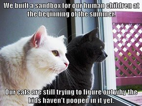 We built a sandbox for our human children at the beginning of the summer.  Our cats are still trying to figure out why the kids haven't pooped in it yet.