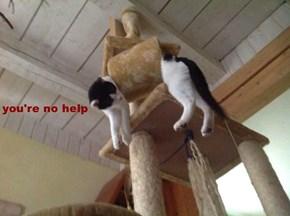 you're no help