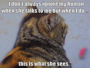 """""""I don't always ignore my human when she talks to me but when I do ...  this is what she sees."""""""