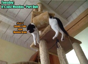 Tuesday:  It's just Monday - Part Duh