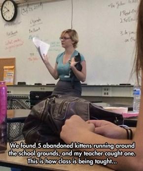 Cat Got Your Teacher