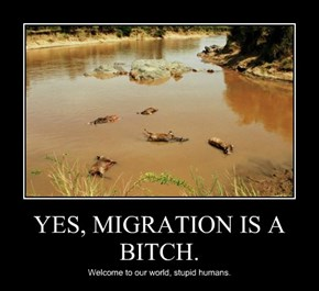 YES, MIGRATION IS A b*tch.