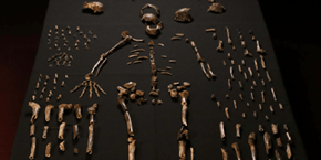 Discovery of the Day: Scientists Find Remains of a Non-Human Relative