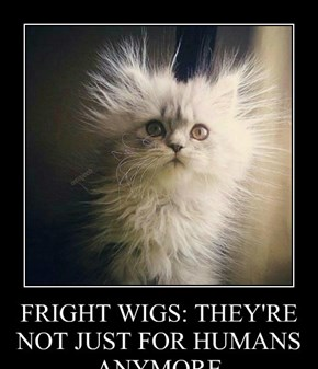 FRIGHT WIGS: THEY'RE NOT JUST FOR HUMANS ANYMORE