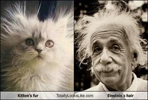 Kitten's fur Totally Looks Like Einstein's hair
