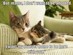 """""""But, mama, I don't want to be adopted.  I want my forever home to be here                       with you."""""""