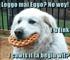 Leggo mai Eggo? No wey! Y u fink  I cawts it ta begin wif?