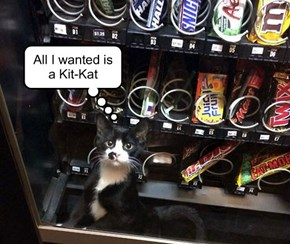 All I wanted is a Kit-Kat