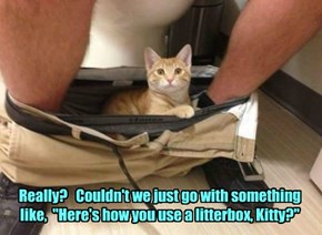 "Really?   Couldn't we just go with something  like,  ""Here's how you use a litterbox, Kitty?"""