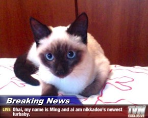 Breaking News - Ohai, my name is Ming and ai am nikkadoo's newest furbaby.