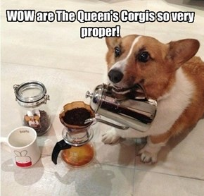 WOW are The Queen's Corgis so very proper!