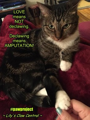 Love is NOT declawing!