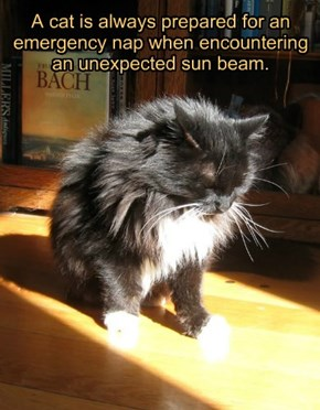 A cat is always prepared for an emergency nap when encountering an unexpected sun beam.