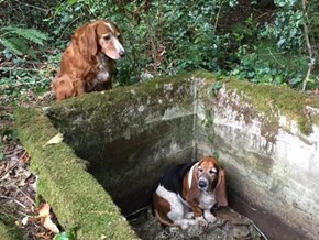 This Hero Dog Watched Over His Trapped Friend for a Week Until They Were Found and Rescued