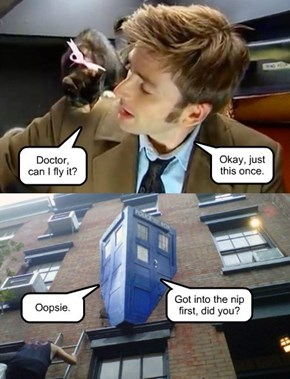 Why Doctors don't let   cats drive the TARDIS.