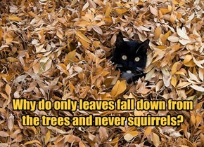 Why do only leaves fall down from the trees and never squirrels?
