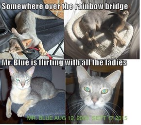 Somewhere over the rainbow bridge Mr. Blue is flirting with all the ladies