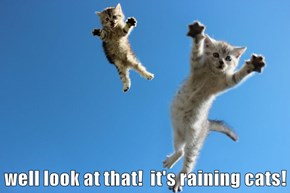 well look at that!  it's raining cats!