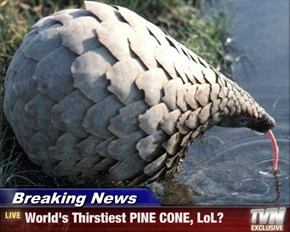 Breaking News - World's Thirstiest PINE CONE, LoL?