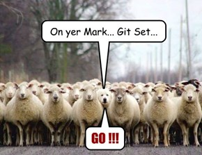 The Start of the Great Sheep Stampede