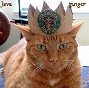 Java                                   ginger