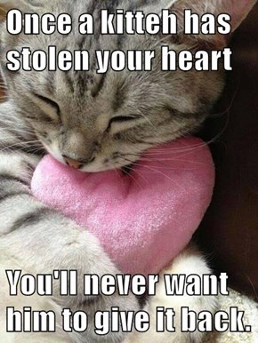 Once a kitteh has stolen your heart  You'll never want him to give it back.